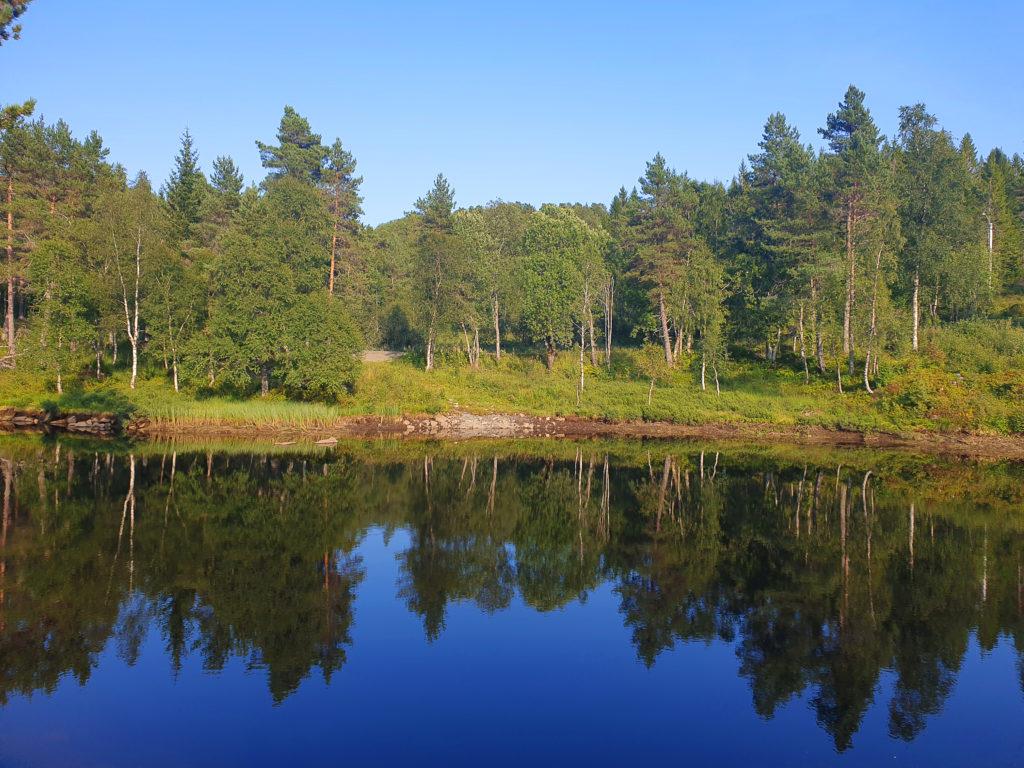 Moldemarka med skog og innsjø